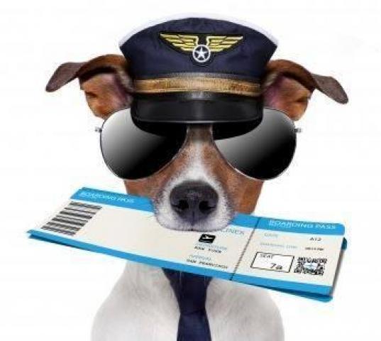 Aero Pets